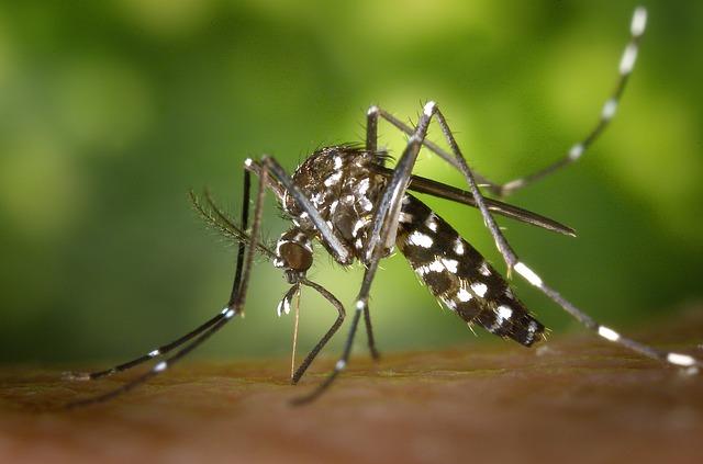 Installation moustiquaire, strasbourg, moustique tigre